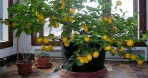 Вид обрезки зависит от назначения растения