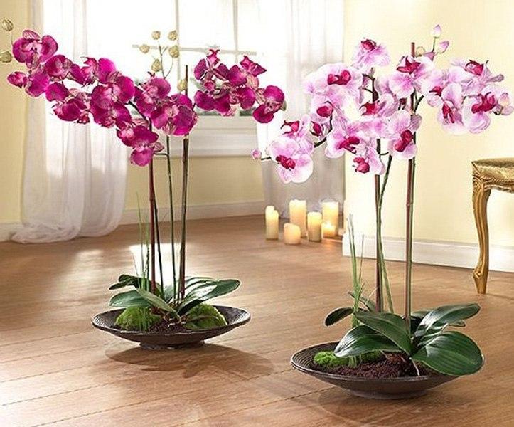 Уход за орхидеями фаленопсисом в домашних условиях