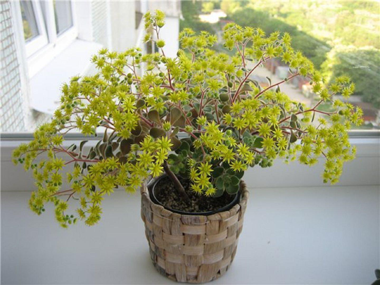 Фото цветка дерево любви