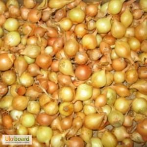 Отличные луковицы крупно