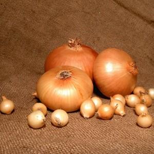 Луковицы крупно
