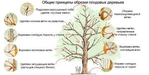 Обрезка плодового дерева осенью