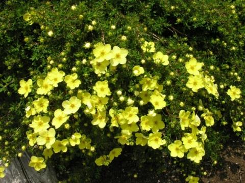 Цветок 72