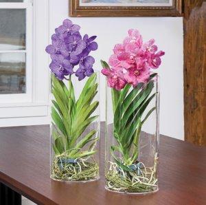 Орхидея ванда уход и выращивание в стеклянной 692